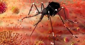 कोरोना के बाद लोगों में जीका वायरस का खौफ जानिए इसके लक्षण