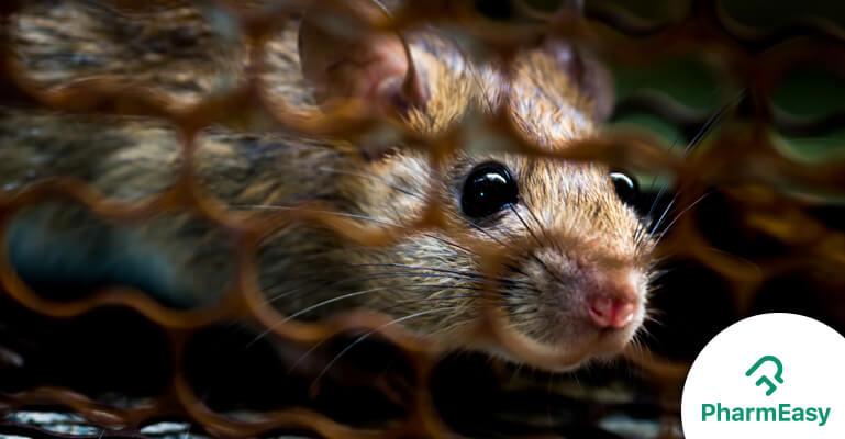 जीआरपी ने झोपड़ी में शव रखवाया, चूहों ने कुतर दी आंखें