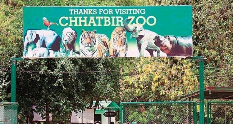 हैदराबाद में 8 शेरों के संक्रमित होने के बाद छतबीड़ जू में भी हाईअलर्ट