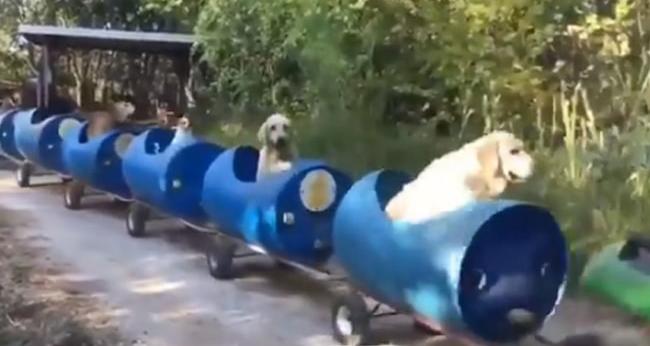 यहां स्ट्रीट डॉग्स के लिए चलती है विशेष ट्रेन