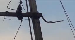 10 फीट लंबे सांप को बिजली के खंबे से लगा तगड़ा झटका, वीडियो हुई वायरल