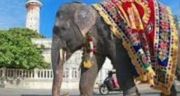 बारात में पटाखे की आवाज़ से पगलाया हाथी, दूल्हे ने भागकर बचाई जान