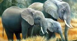 World Elephant Day 2021: हाथियों के बारे में जानिये रोचक बातें