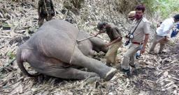 बेजुबान जानवरों पर बरसा कुदरत का कहर, बिजली गिरने से 18 हाथियों की मौत
