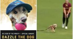 मैदान पर घुसे कुत्ते को आईसीसी ने दिया