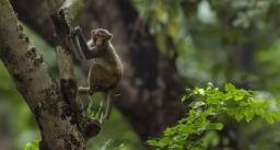 बंदर ने वकील से छीना 2 लाख रुपये से भरा बैग, लोगों पर की रुपयों की बारिश