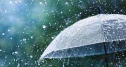 बारिश में तेजी से फ़ैल सकती है ब्लैक फंगस, इन तरीकों से करें बचाव