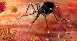 कोरोना के बाद लोगों में जीका वायरस का खौफ, जानिए इसके लक्षण